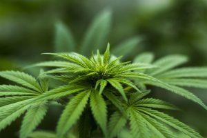 יתרונות בריאותיים שיש באכילת עלים ירוקים