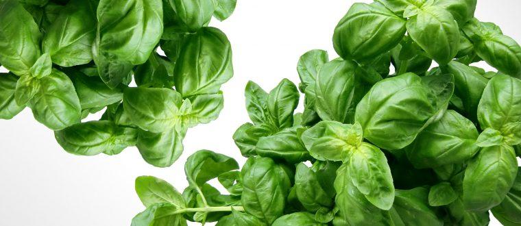 היתרונות הבריאותיים שיש באכילת עלים ירוקים